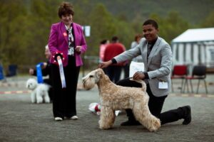 Patrick Oware har stilt denne flotte hunden til BIS flere ganger.