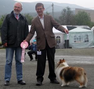 BIS Veteran, Shetland Sheepdog, Can US SE N LI Ch Ha-Dar Newsworthy.